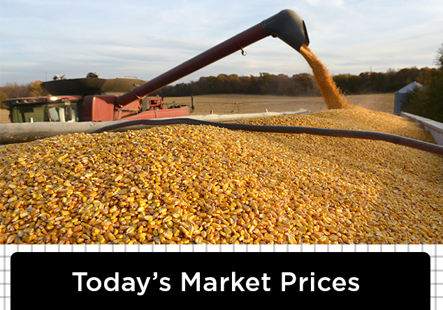 Grain Prices